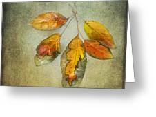 Five Autumn Leaves Greeting Card