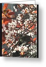 Five Petals - Spring Blossoms Greeting Card