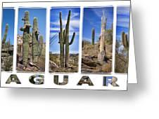 Five Saguaros Greeting Card