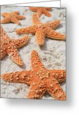 Five Starfish Greeting Card