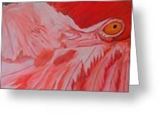 Flamboyant, Flamingo   Greeting Card
