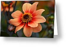 Flamboyant Dahlia. Greeting Card