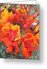 Flamboyant Desert Flowers Greeting Card