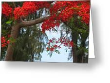 Flamboyant - Ile De La Reunion - Reunion Island Greeting Card by Francoise Leandre