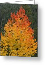 Flame On Greeting Card