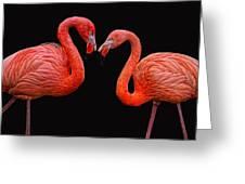 Flamenco ... Baby Greeting Card