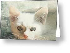 Flamepoint Siamese Kitten Greeting Card