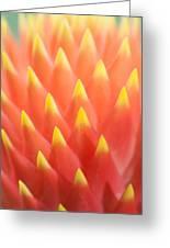 Flaming Bromeliad  Greeting Card