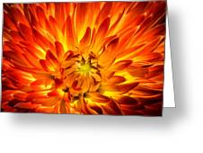 Flaming Dahlia - Paintography Greeting Card