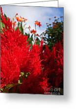Flaming Feathered Flower Power Greeting Card