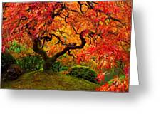 Flaming Maple Greeting Card