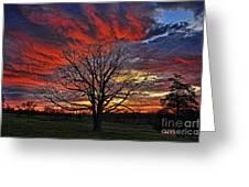 Flaming Oak Sunrise Greeting Card