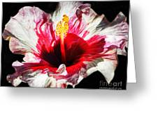 Flaming Petals Greeting Card