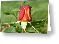 Flaming Rose Greeting Card