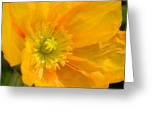 Flaming Yellow Poppy  Greeting Card