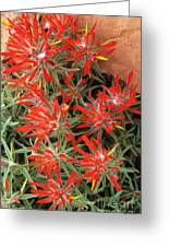 Flaming Zion Paintbrush Wildflowers Greeting Card