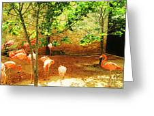 Flamingo 1 Greeting Card