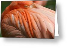 Flamingo 1 Greeting Card