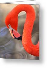 Flamingo Curves Greeting Card