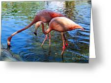 Flamingo Duo Greeting Card