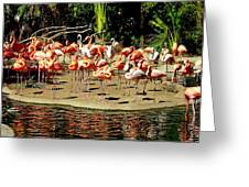 Flamingo Family Reunion Greeting Card