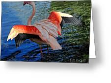 Flamingo Flight Greeting Card