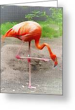 Flamingo Four Greeting Card