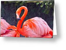 Flamingo In The Wild Greeting Card