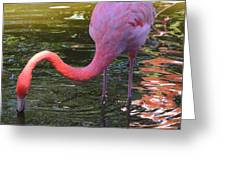 Flamingo Greeting Card by Judy  Waller