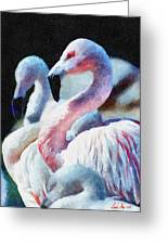 Flamingo Greeting Card by Lester Phipps