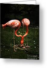 Flamingo Mirrored Greeting Card