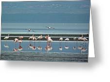 Flamingo On Lake Nakuru Greeting Card