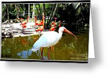Flamingo Park Florida Greeting Card