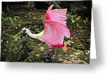 Roseate Spoonbil Greeting Card