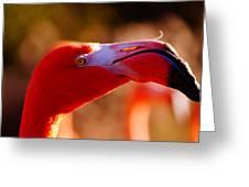 Flamingo-profile Greeting Card by Angelika Sauer