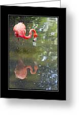 Flamingo Reflected Greeting Card