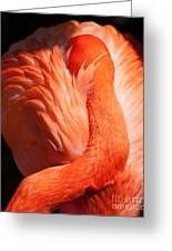 Flamingo Resting Greeting Card