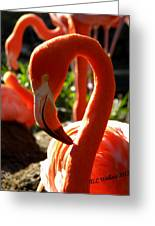 Flamingo Greeting Card by Tammy Wallace