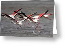 Flamingoes In Flight Greeting Card