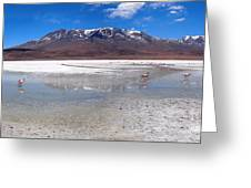 Flamingos At The Altiplano In A Salt Lake Greeting Card