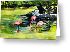Flamingos At The St Louis Zoo Greeting Card