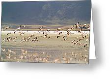 Flamingos Flying Over Water Greeting Card