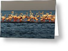 Flamingos On Lake Turkana Outside Elyse Greeting Card