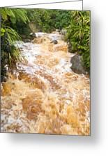 Flash Flood In West Coast Creek Of Nz South Island Greeting Card