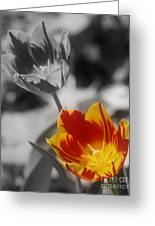 Flashy Tulips Greeting Card