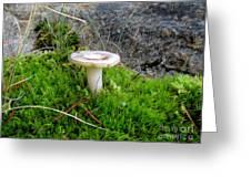 Flat Topped Mushroom Greeting Card