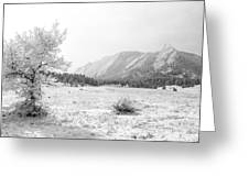 Flatirons Tree - Winter Greeting Card