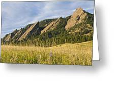 Flatirons With A Purple Wildflower  Greeting Card