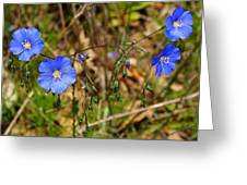 Flax Flower At The Chambers Island Lighthouse  Greeting Card