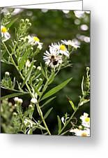 Fleabane Bee Greeting Card